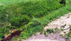 Diskais sužalojo pievoje miegojusią moterį