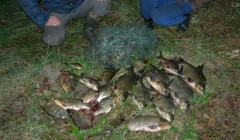 Nepigios Kavarsko tvenkinio žuvys