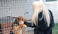 Kupiškėnų rinkta parama pasiekė Kaimiškio gyvūnus