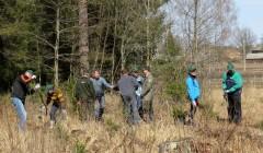 Urėdijos sieks šalies rekordo – apsodinto didžiausio miškų ploto