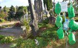 Kupiškėnai išlaikė kapinių laistytuvų egzaminą
