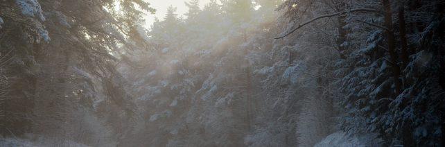 Anykštėnai ir rokiškėnai dar turi galimybę medžioti vilkus