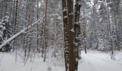 Anykštėnai tvarkys mišką, juosiantį Laimės žiburio paminklą