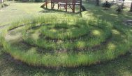 Trumpai: rokiškėnai darželinukai vaikštinėja linų labirintu