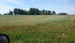 Rokiškio rajono ūkininkų sąjungos pirmininkė klaidina, jog teikė prašymą dėl ekstremalios situacijos paskelbimo