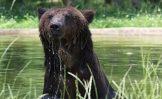 Iš Nikolajaus Zubovo atimtas meškinas Vipas puikiai jaučiasi Vokietijos gyvūnų parke