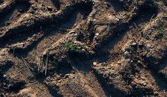 Rokiškio rajono ūkininkai tikisi išlikti nederlingų žemių žemėlapyje
